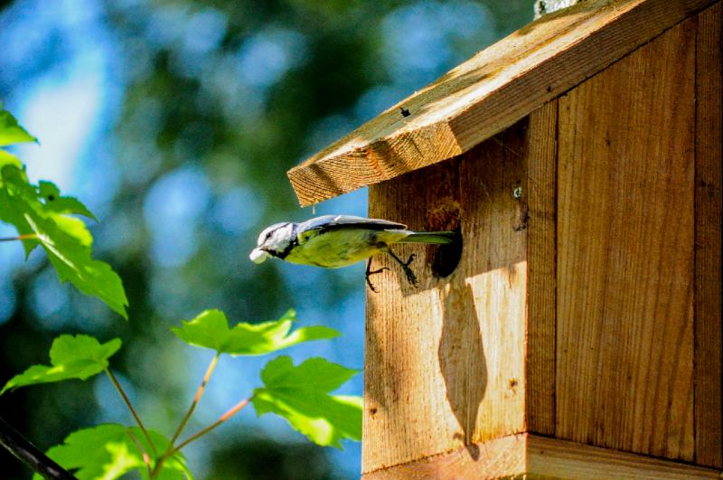 Blue Tit Birdhouse