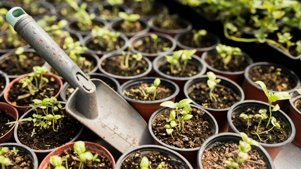 February Gardening To Do List