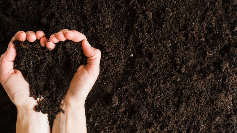 Test and clean your soil