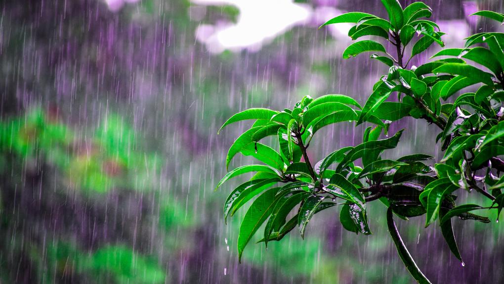 Winter Garden Damage - UK Grow Guide After Rain