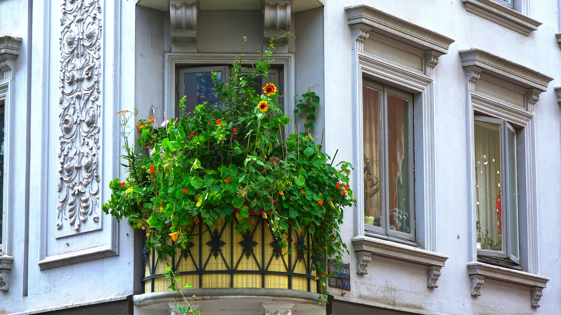 Balcony gardening in UK. Gardening trends 2020.