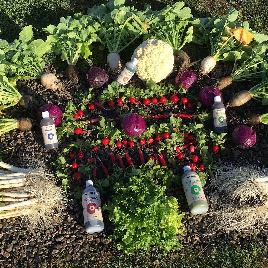 Fruits, veggies, nutrients, fertilisers, Biobizz bottles.