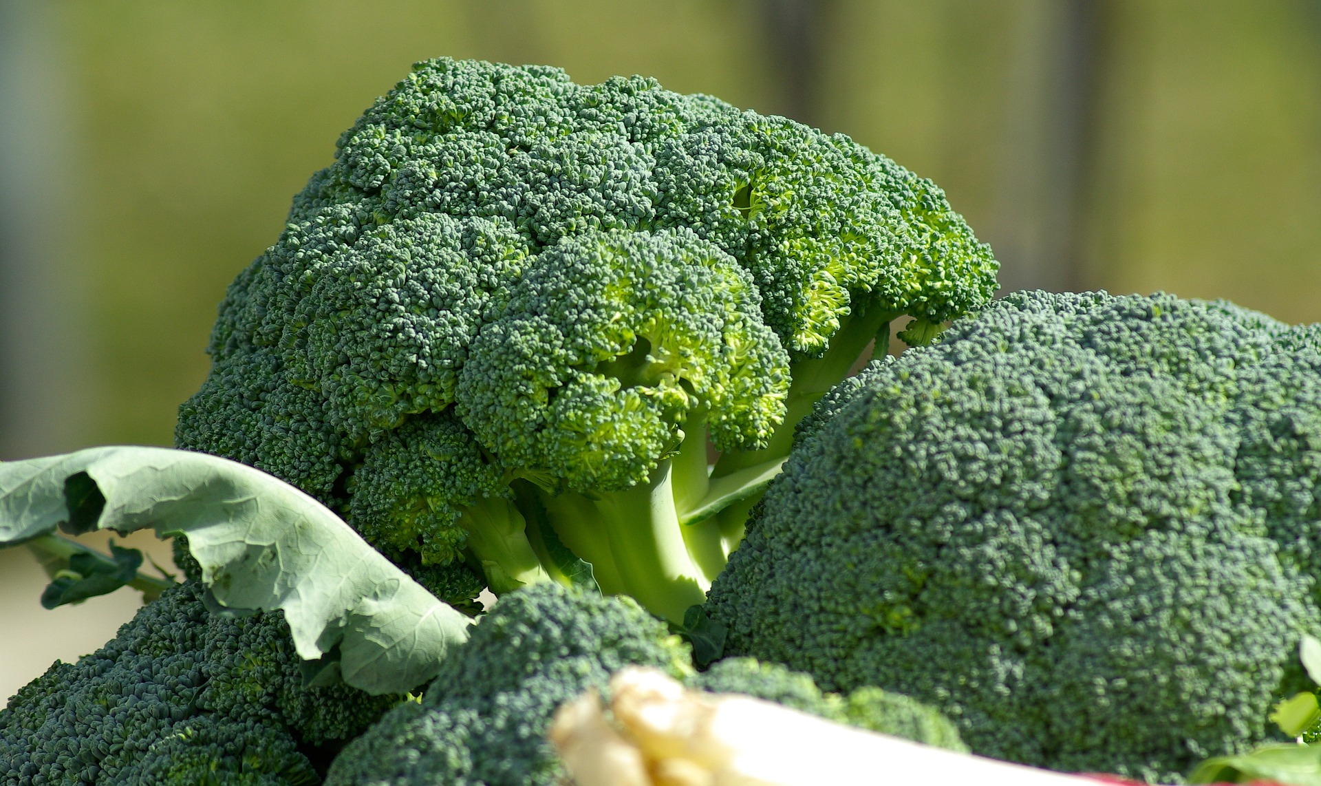 Grow broccoli in UK