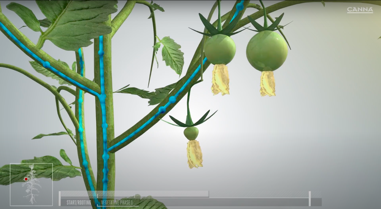 CANNA PK 13/14 Gives you bigger heavier fruits.