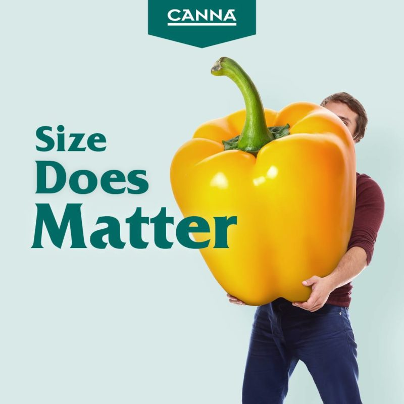Canna boost works by boosting plants' metabolism.