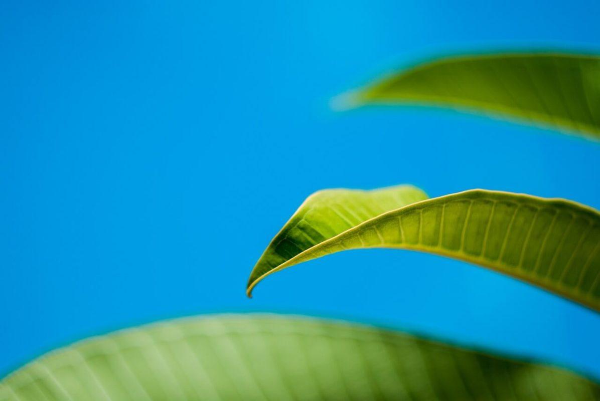 Nitrogen for plants