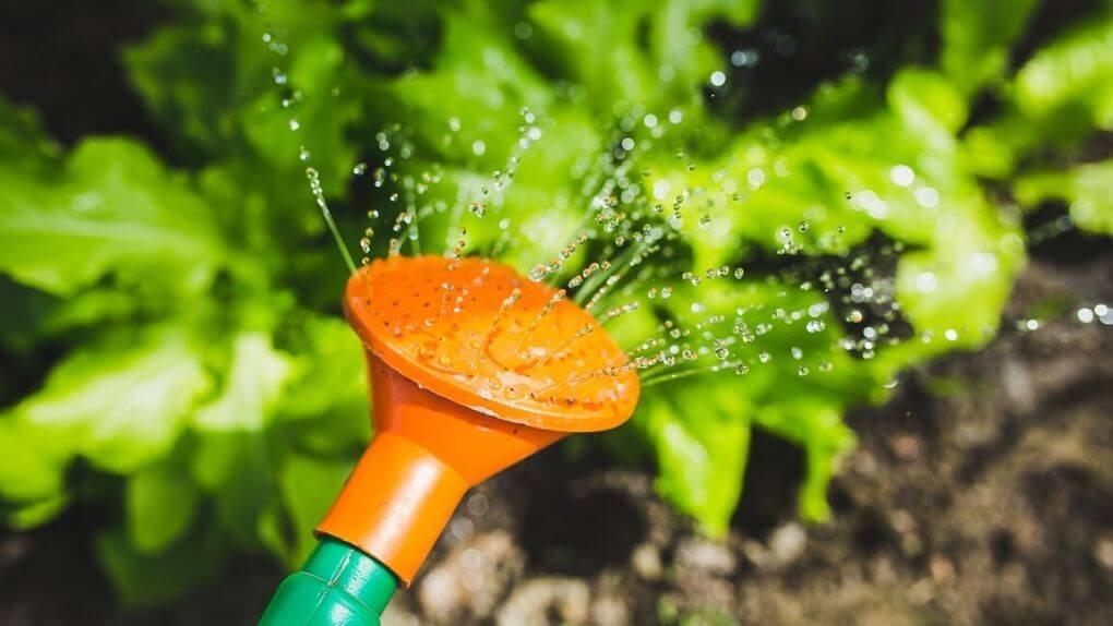 The ultimate guide to NPK fertilisers