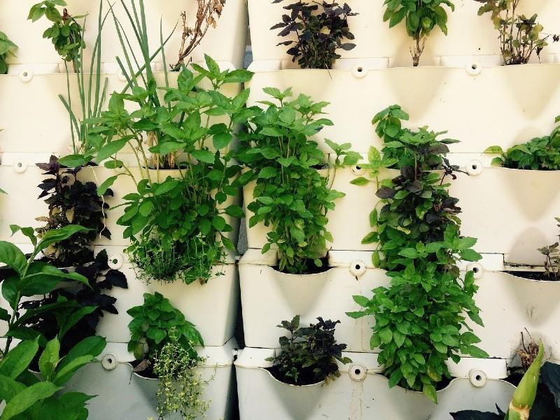 potted-vertical-garden
