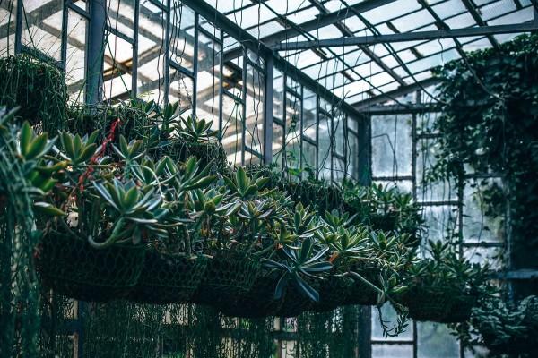 succulents-hanging-pots