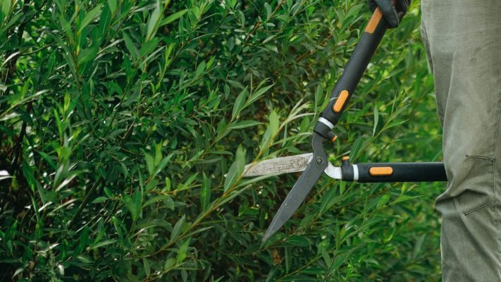 September guide to pruning