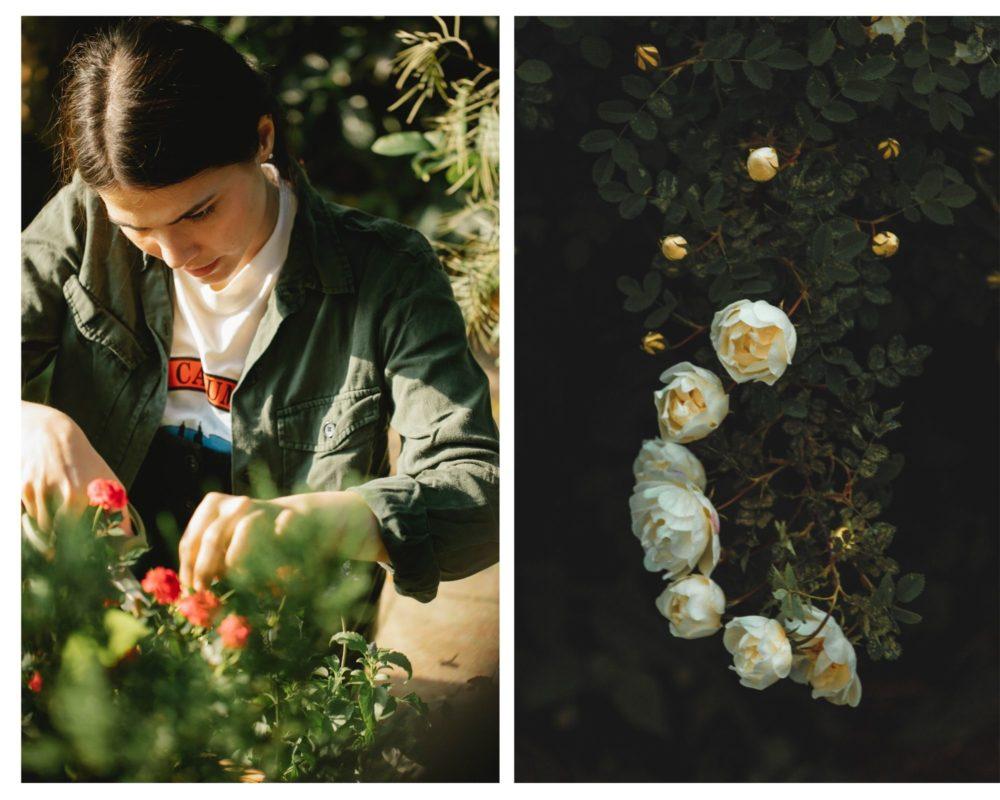 woman pruning climbing rose bush